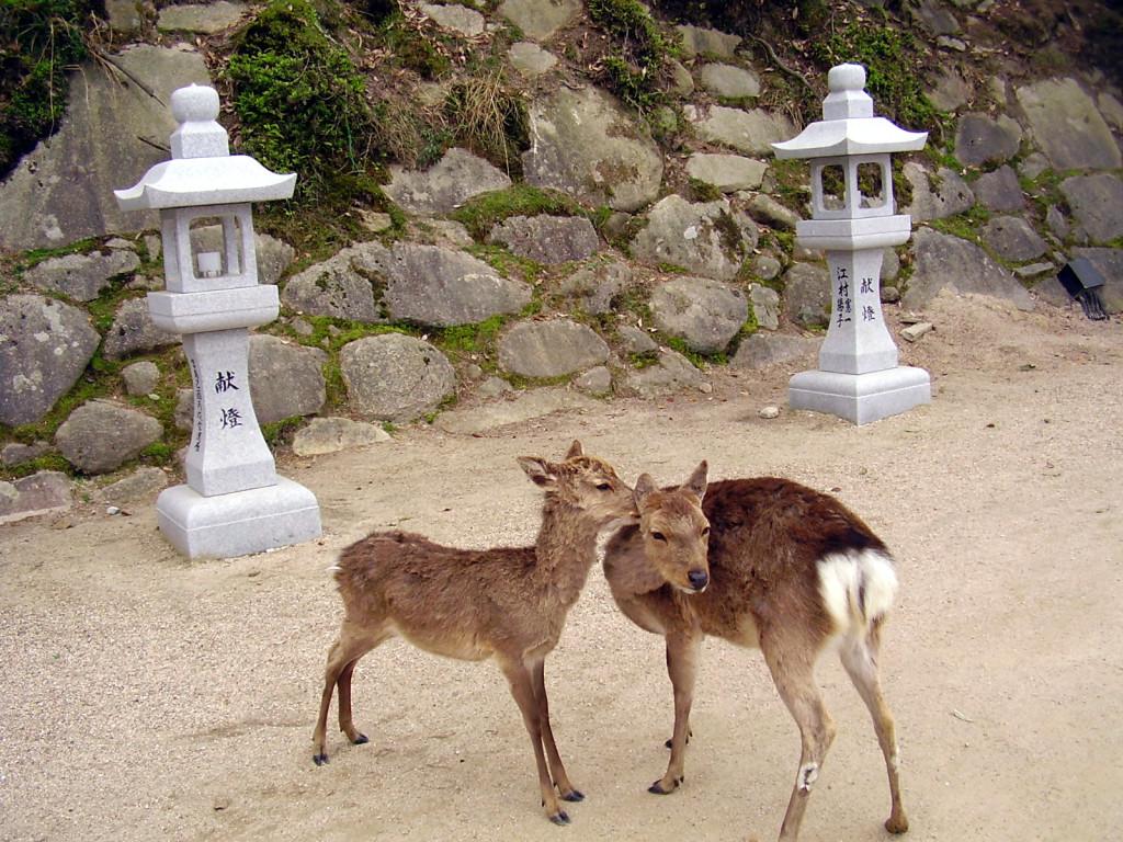 Miyajima - sarny.