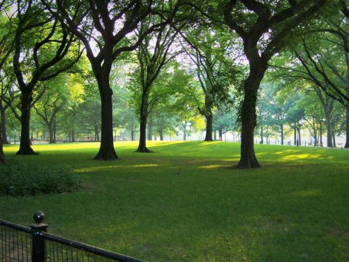 Central Park – zielone płuca betonowej dżungli