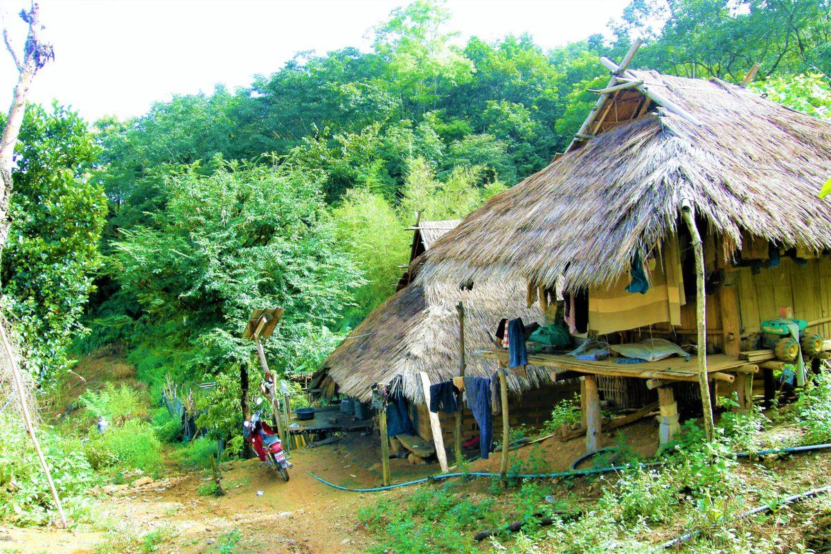 Plemiona Akha żyją w chatach wykonanych z bambusu i dachach krytych strzechą