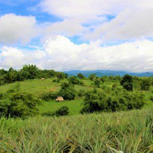 Zielone wzgórza w północnej Tajlandii