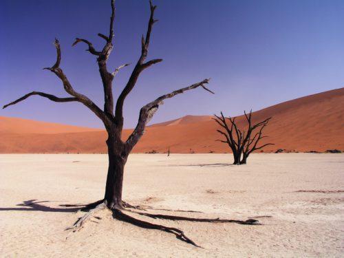 Pustynia Namib – miejsce, w którym nic nie ma