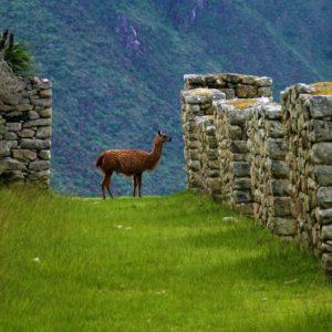 Machu Picchu. Miasto ponad chmurami