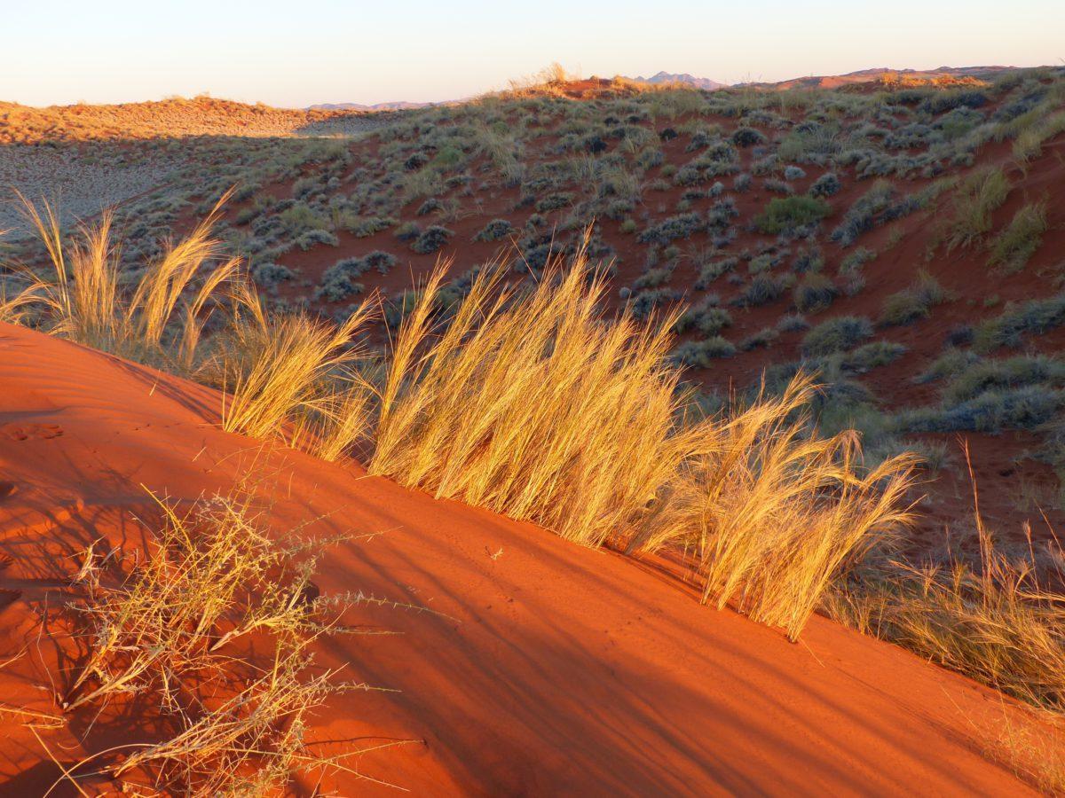Namib zajmuje powierzchnię 130.000 km²