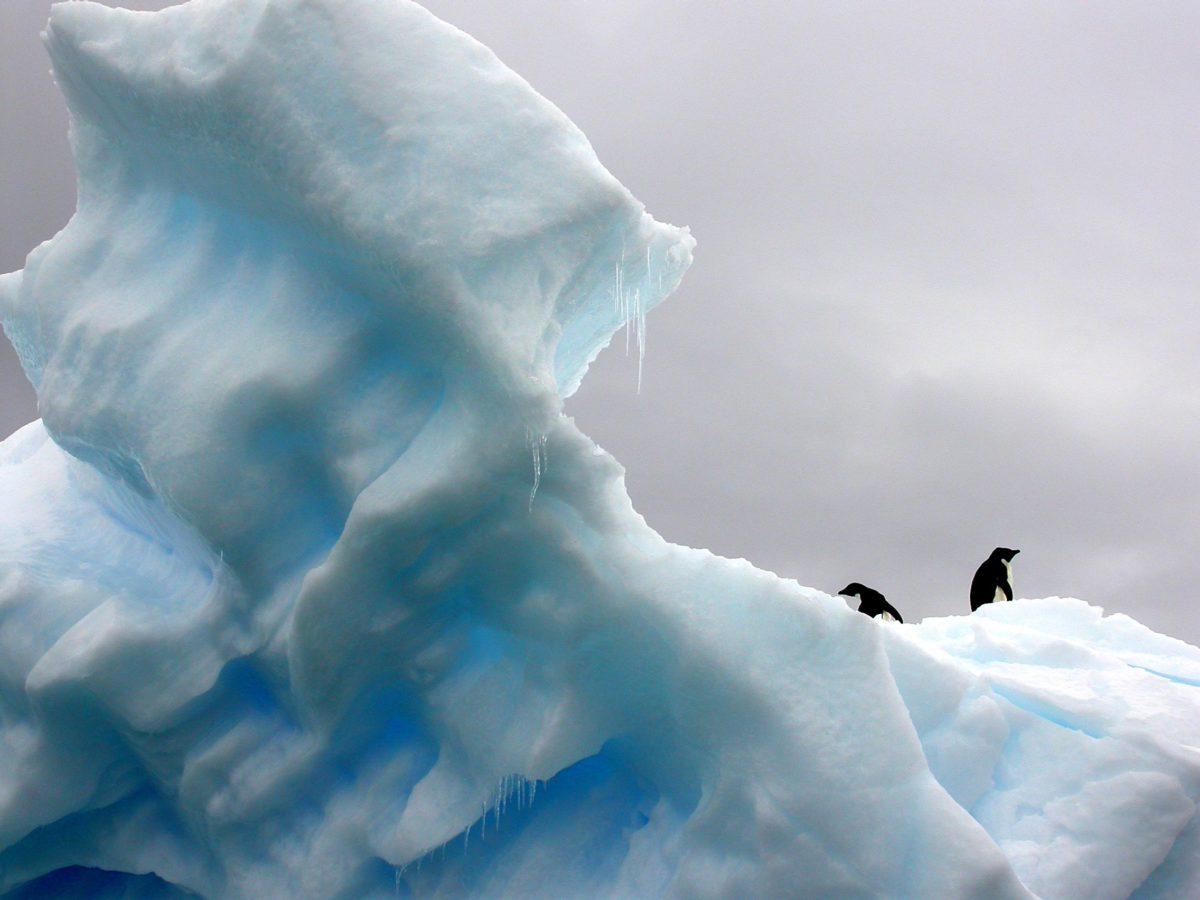 Pingwiny muszą przejść aż 120 km w głąb lądu, aby dotrzeć do celu