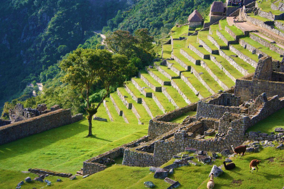 Kamienne tarasy Machu Picchu