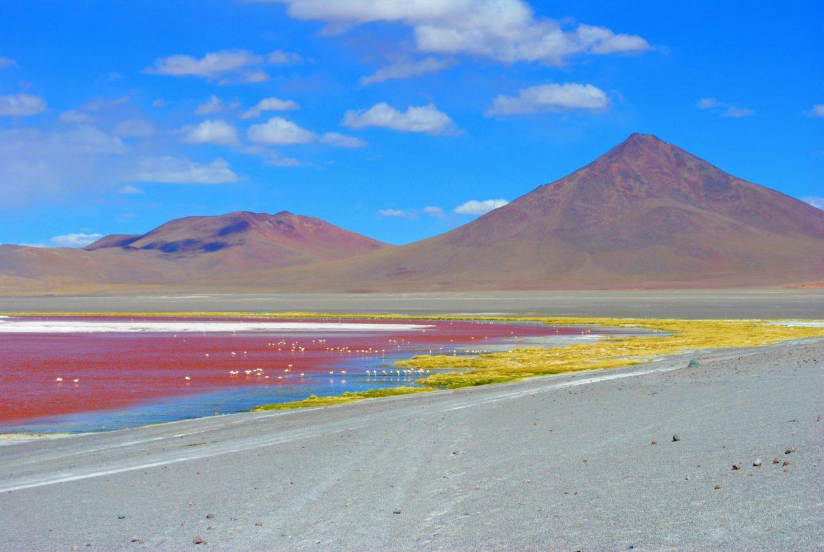 Czerwona laguna na płaskowyżu Altiplano w Andach