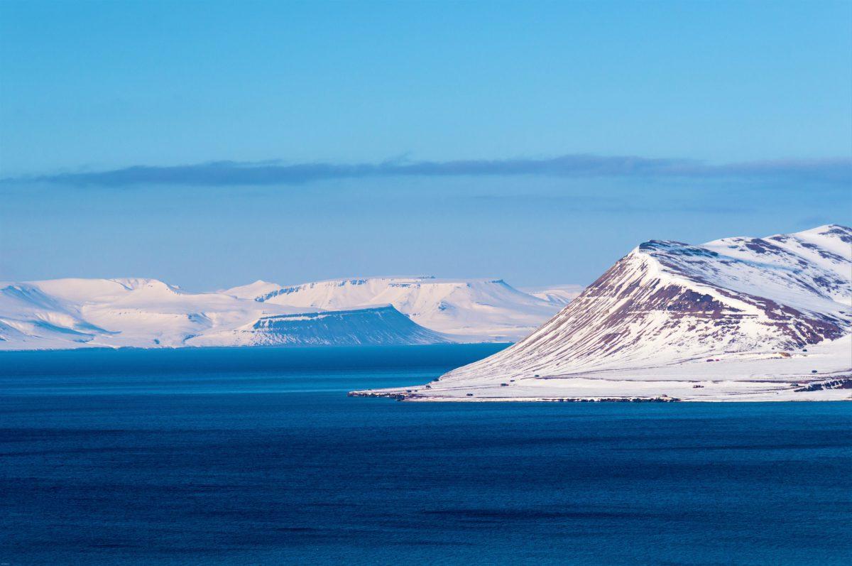 Wyspy Svalbardu to bezpieczne schronienie dla niedźwiedzi polarnych